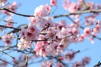flower-90852_640.jpg