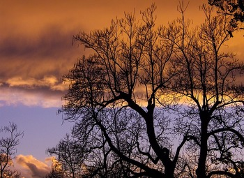 tree-1290174_640.jpg